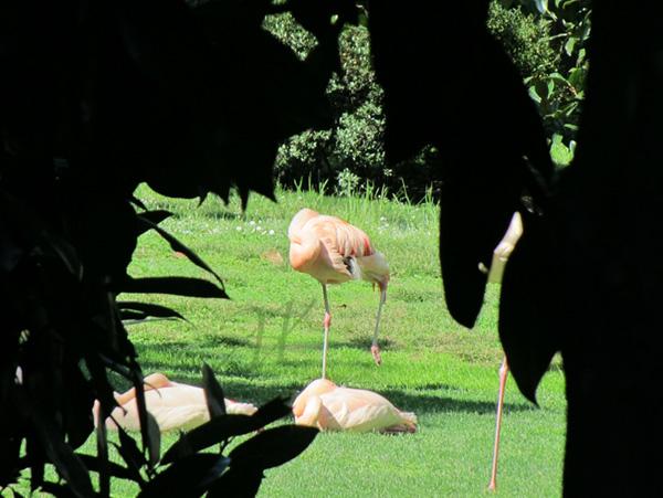 flamingos in a city garden